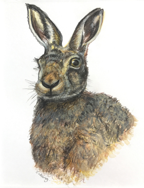 Hare - Pencil and acrylic on paper