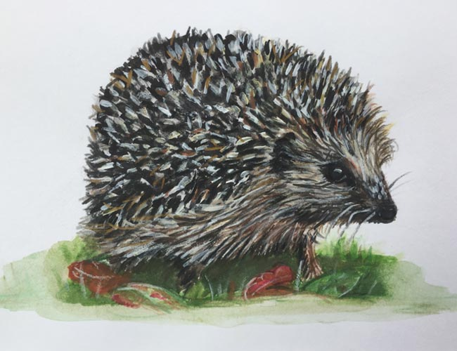 Hedgehog - Acrylic and watercolour on paper (Original available £75)