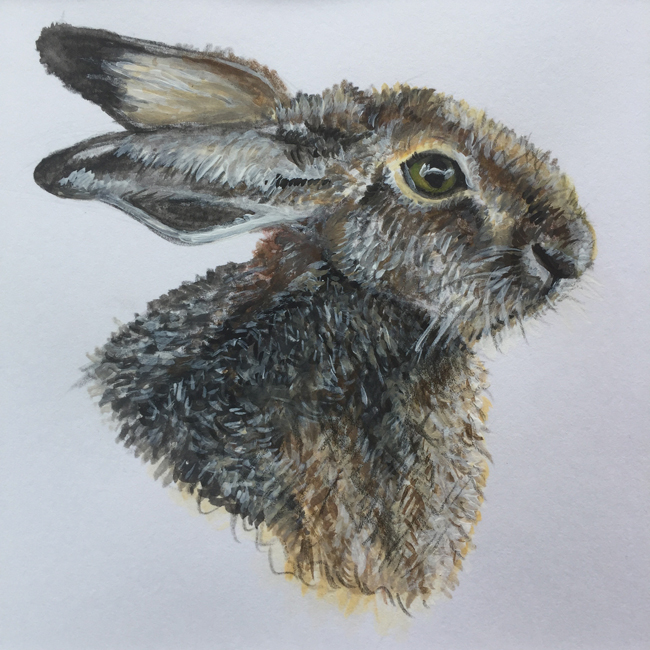Hare 2 - Pencil and acrylic on paper (Open edition giclée prints available £18.50)