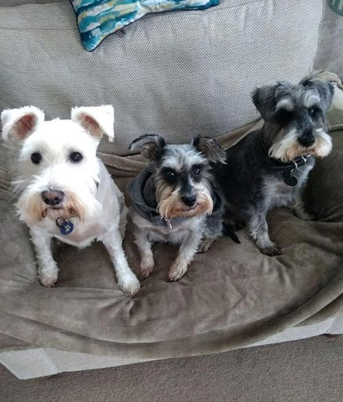 Source photo of the three dogs to work from