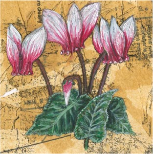 Cyclamen - Mixed media on paper (Greeting card £2.50)