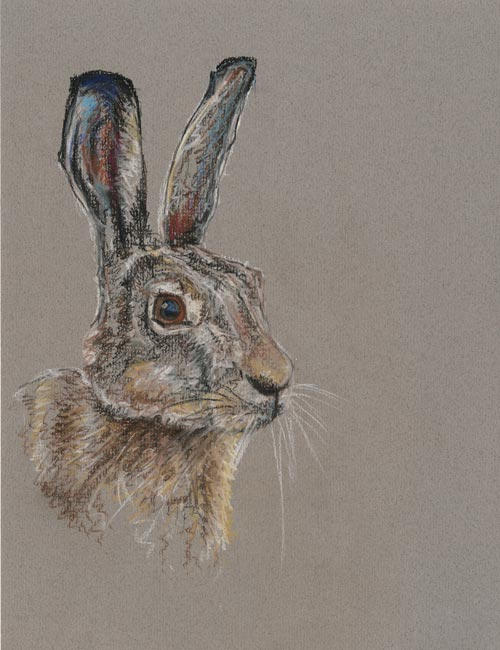Grey Hare - Pastel Pencil (Open edition giclée prints available £35)